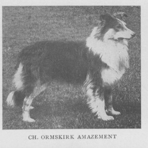 "Champion Collie ""Ormskirk Amazement"""