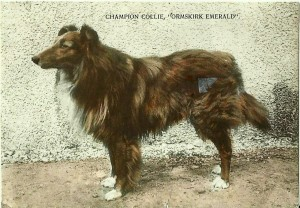 "Champion Collie ""Ormskirk Emerald"""