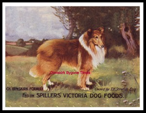 An advert for Spiller's Victoria Dog Food, featuring Ormskirk Foxall, one of Stretch's collies